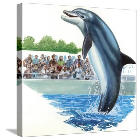 Bottlenose Dolphin or Bottle-Nosed Dolphin (Tursiops Truncatus) During Performance in Dolphinarium--Stretched Canvas Print