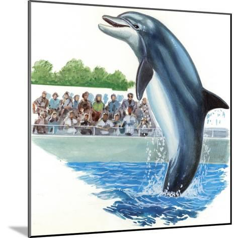 Bottlenose Dolphin or Bottle-Nosed Dolphin (Tursiops Truncatus) During Performance in Dolphinarium--Mounted Giclee Print