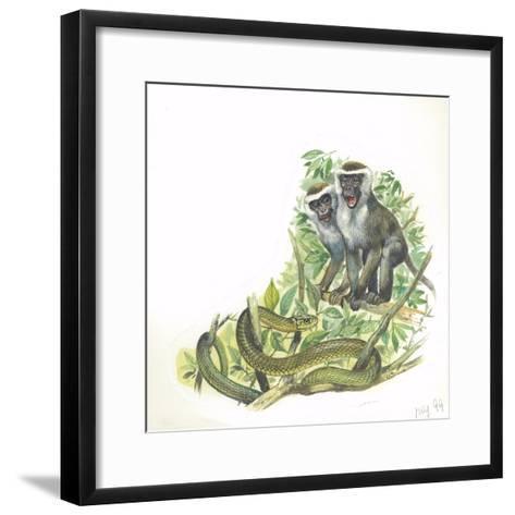 Vervet or Green Monkeys Chlorocebus Aethiops Giving Alarm Calls to Signal the Presence of Snake--Framed Art Print