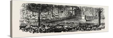 Franco-Prussian War: the Last in the Luxembourg Gardens Housed Sheep, France--Stretched Canvas Print