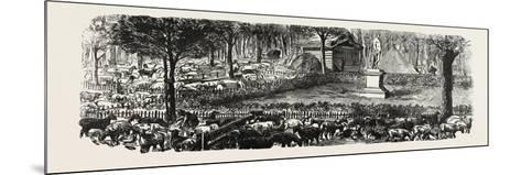 Franco-Prussian War: the Last in the Luxembourg Gardens Housed Sheep, France--Mounted Giclee Print