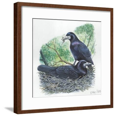 Couple of Rooks Corvus Frugilegus, Male Brings Food to Female While She Is Incubating Eggs--Framed Art Print