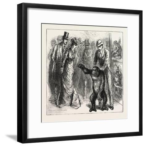 A Distinguished Visitor at Liverpool, the Young Gorilla Holding a Reception in the Museum, 1876, Uk--Framed Art Print