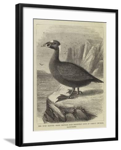 The Surf Scoter, Rare British Bird Recently Shot at Christ Church, Hampshire--Framed Art Print