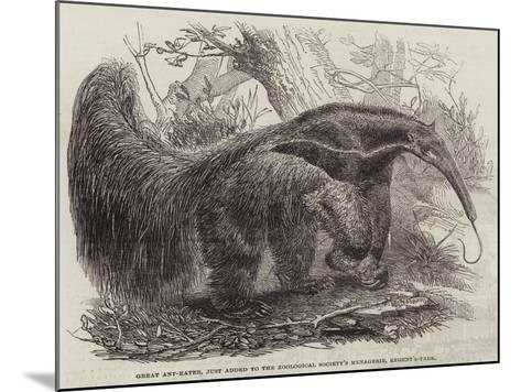 Great Ant-Eater, Just Added to the Zoological Society's Menagerie, Regent'S-Park--Mounted Giclee Print