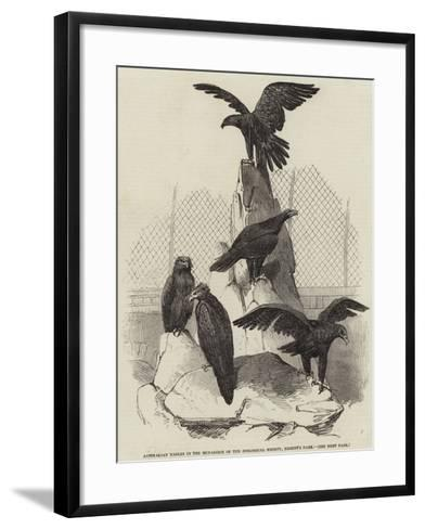 Australian Eagles in the Menagerie of the Zoological Society, Regent's Park--Framed Art Print