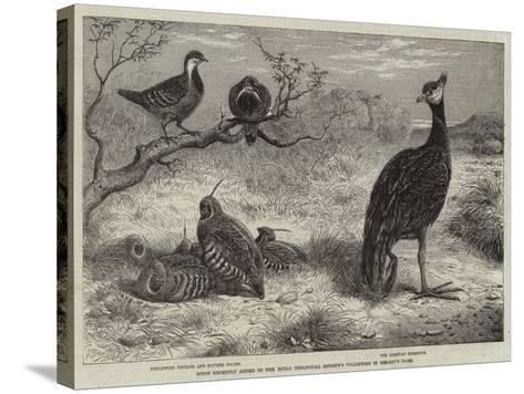 Birds Recently Added to the Royal Zoological Society's Collection in Regent's Park--Stretched Canvas Print