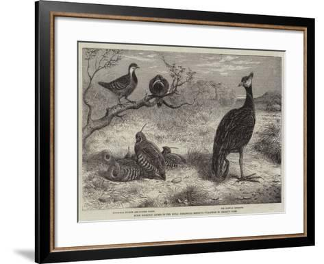 Birds Recently Added to the Royal Zoological Society's Collection in Regent's Park--Framed Art Print
