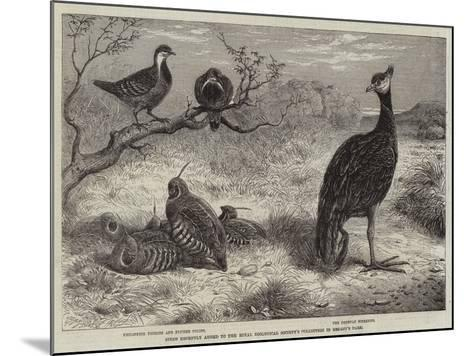Birds Recently Added to the Royal Zoological Society's Collection in Regent's Park--Mounted Giclee Print
