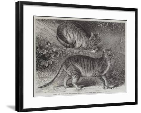 Syrian Cats Presented to the Zoological Society of London by the Prince of Wales--Framed Art Print