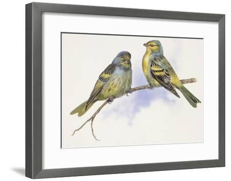 Zoology: Birds, Corsican Finch (Carduelis Corsicana) and European Goldfinch (Carduelis Carduelis)--Framed Art Print