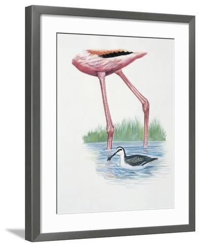 Greater Flamingo (Phoenicopterus Ruber) and a Red-Necked Phalarope (Phalaropus Lobatus) in a Pond--Framed Art Print