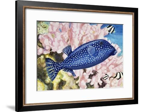 Spotted Boxfish or Spotted Trunkfish (Ostracion Lentiginosus or Ostracion Meleagris), Ostraciidae--Framed Art Print