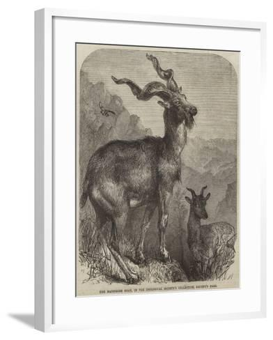 The Markhore Goat, in the Zoological Society's Collection, Regent's Park--Framed Art Print