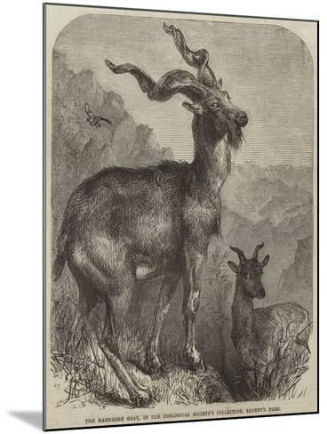 The Markhore Goat, in the Zoological Society's Collection, Regent's Park--Mounted Giclee Print