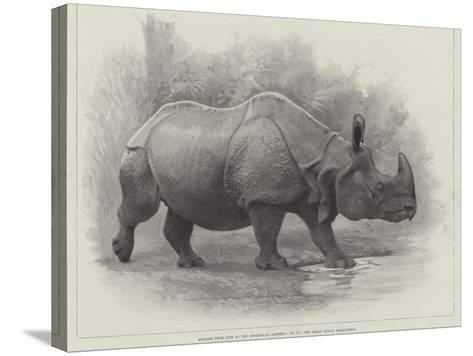 Studies from Life at the Zoological Gardens, the Great Indian Rhinoceros--Stretched Canvas Print