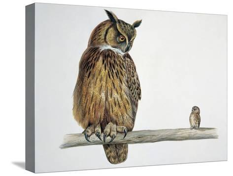Close-Up of an Eurasian Eagle Owl (Bubo Bubo) Perching on a Branch with an Eurasian Pygmy Owl (Glau--Stretched Canvas Print