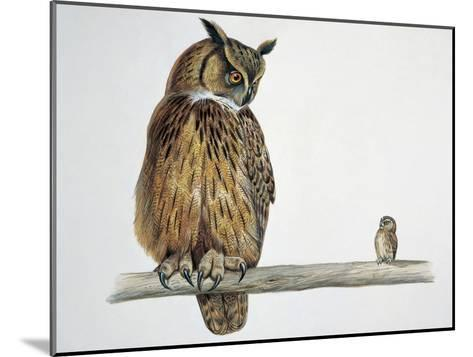 Close-Up of an Eurasian Eagle Owl (Bubo Bubo) Perching on a Branch with an Eurasian Pygmy Owl (Glau--Mounted Giclee Print