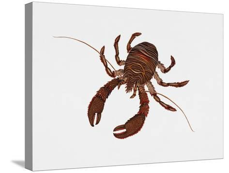 Black Squat Lobster (Galathea Squamifera), Galatheidae, Artwork by Rebecca Hardy--Stretched Canvas Print