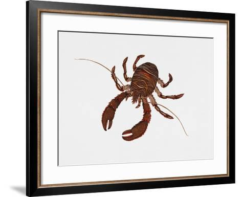 Black Squat Lobster (Galathea Squamifera), Galatheidae, Artwork by Rebecca Hardy--Framed Art Print