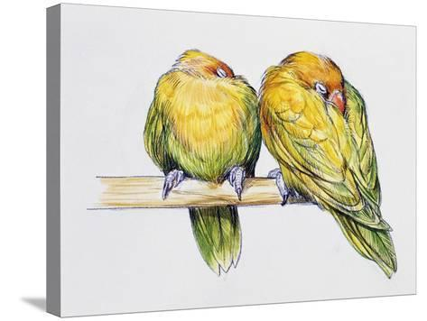 Pair of Fischer's Lovebirds While Sleeping (Agapornis Fischeri), Psittacidae--Stretched Canvas Print