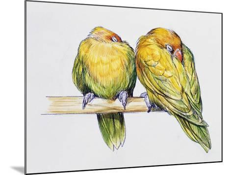 Pair of Fischer's Lovebirds While Sleeping (Agapornis Fischeri), Psittacidae--Mounted Giclee Print