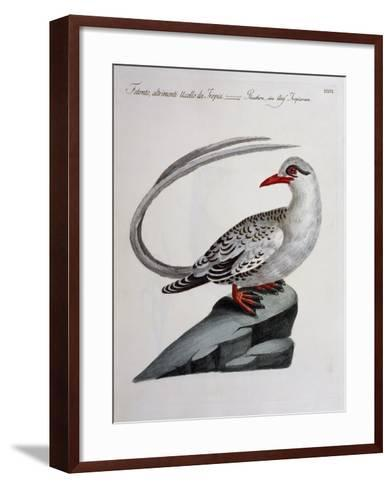 Red-Billed Tropicbird (Phaethon Aethereus), Coloured from History of Birds, 1767, Table 516--Framed Art Print
