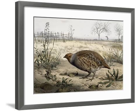 Grey Partridge, Coloured by Edouard Travies (Born in 1806), France, 19th Century--Framed Art Print