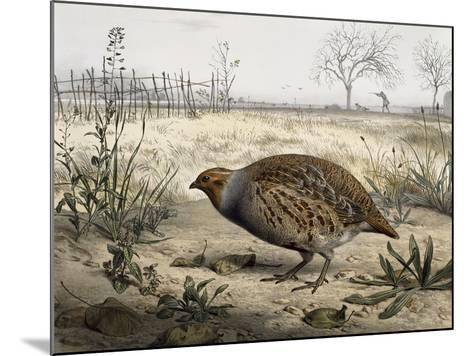 Grey Partridge, Coloured by Edouard Travies (Born in 1806), France, 19th Century--Mounted Giclee Print