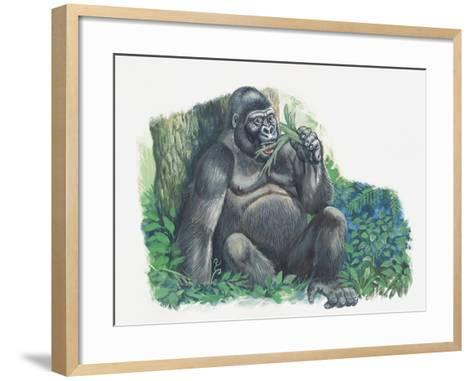 Close-Up of a Gorilla Sitting in the Forest and Eating Leaves (Gorilla Gorilla)--Framed Art Print