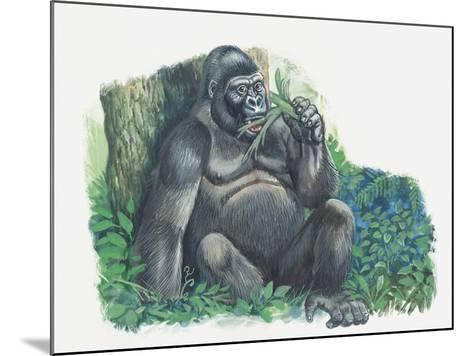 Close-Up of a Gorilla Sitting in the Forest and Eating Leaves (Gorilla Gorilla)--Mounted Giclee Print