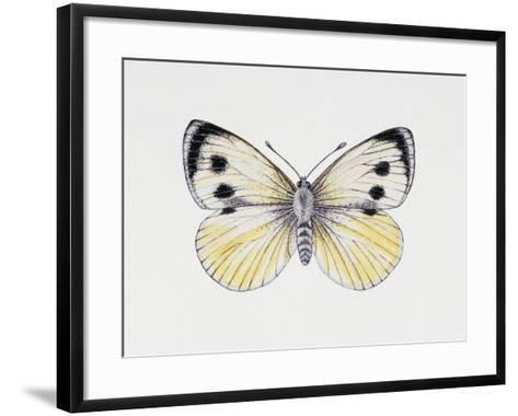 Large White Butterfly (Pieris Brassicae), Pieridae, Artwork by Rebecca Hardy--Framed Art Print