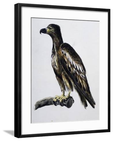 White-Tailed Eagle (Haliaeetus Albicilla), Watercolour, France, 18th Century--Framed Art Print