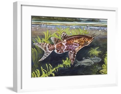 Blotched Upside-Down Catfish (Synodontis Nigriventris), Mochokidae--Framed Art Print