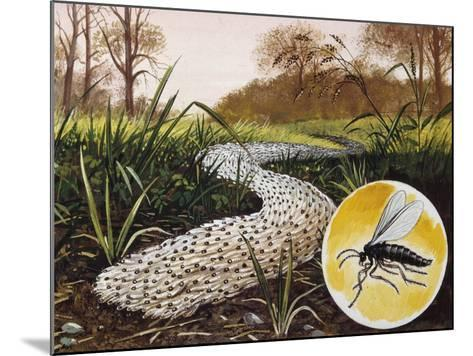 Column of Larvae of Fungus Gnats (Sciara Mmlitaris) Migrating to Pupation Sites, Sciaridae--Mounted Giclee Print