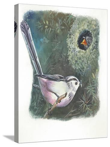 Long-Tailed Tit Aegithalos Caudatus Bringing Food to Young in Nest--Stretched Canvas Print