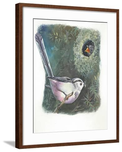 Long-Tailed Tit Aegithalos Caudatus Bringing Food to Young in Nest--Framed Art Print