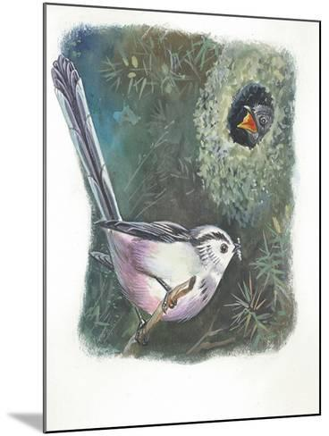 Long-Tailed Tit Aegithalos Caudatus Bringing Food to Young in Nest--Mounted Giclee Print
