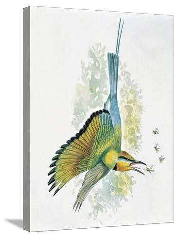 Close-Up of a Blue-Tailed Bee-Eater (Merops Philippinus) Flying and Eating Insects--Stretched Canvas Print