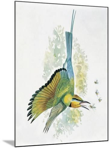 Close-Up of a Blue-Tailed Bee-Eater (Merops Philippinus) Flying and Eating Insects--Mounted Giclee Print