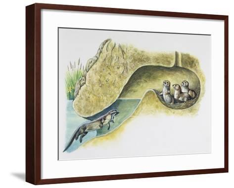 Female European Otter (Lutra Lutra), Mustelidae, Bringing Food to Her Pups in Holt--Framed Art Print