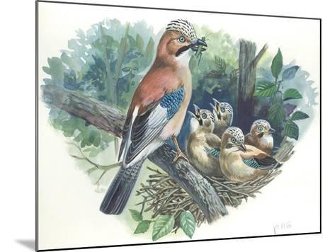 Eurasian Jay Garrulus Glandarius While Bringing Food to Young in Nest--Mounted Giclee Print