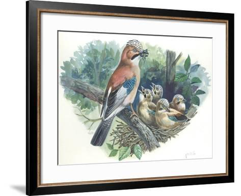 Eurasian Jay Garrulus Glandarius While Bringing Food to Young in Nest--Framed Art Print