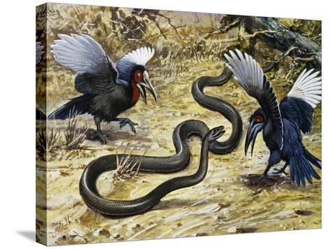 Black Mamba or Black-Mouthed Mamba (Dendroaspis Polylepis), Elapidae--Stretched Canvas Print
