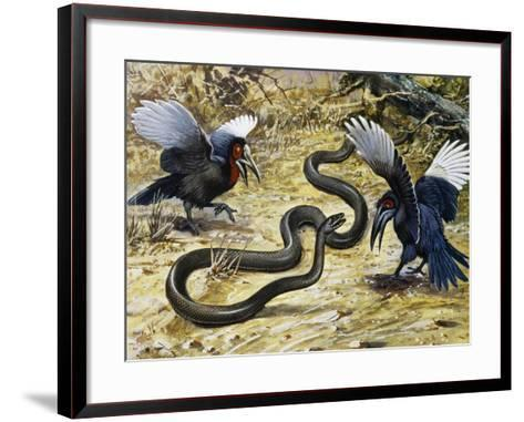 Black Mamba or Black-Mouthed Mamba (Dendroaspis Polylepis), Elapidae--Framed Art Print