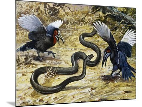 Black Mamba or Black-Mouthed Mamba (Dendroaspis Polylepis), Elapidae--Mounted Giclee Print