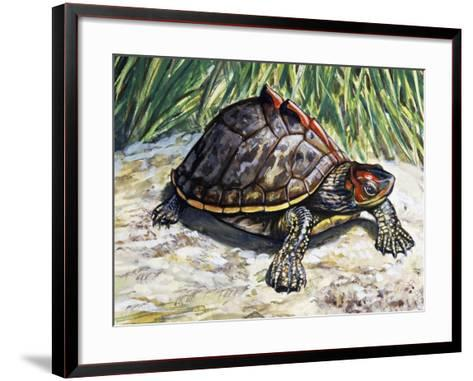 Indian Roofed Turtle (Pangshura Tecta or Kachuga Tecta), Geoemydidae--Framed Art Print