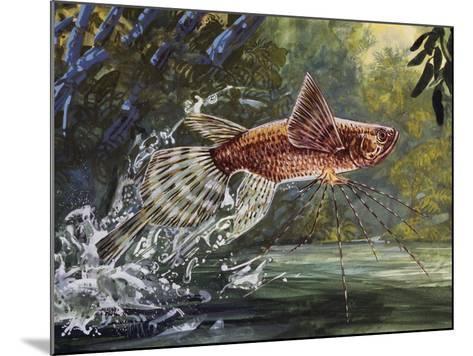 Freshwater Butterflyfish or African Butterflyfish (Pantodon Buchholzi), Pantodontidae--Mounted Giclee Print