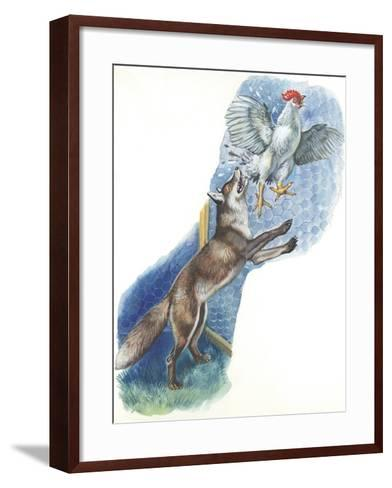 Fox (Vulpes Vulpes) Trying to Catch Rooster While Raiding Hen House--Framed Art Print