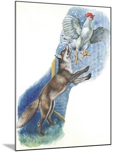 Fox (Vulpes Vulpes) Trying to Catch Rooster While Raiding Hen House--Mounted Giclee Print